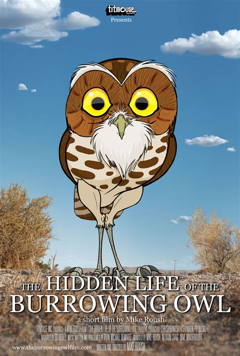 film cartoon owl the owl pages forum view topic burrowing owl animated