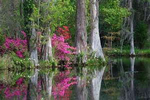 us south carolina s magnolia plantation gardens