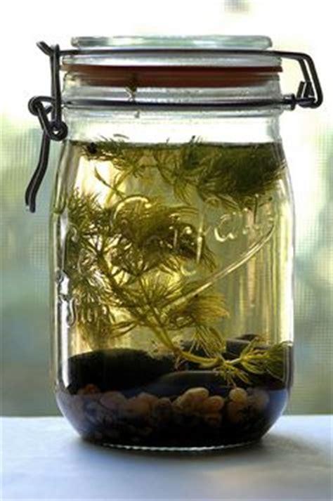 membuat aquascape pdf 1000 images about natural aquariums on pinterest