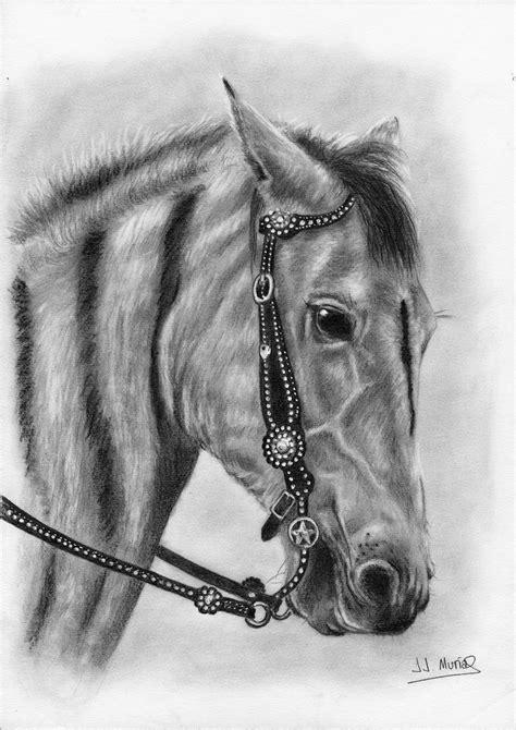caballo a lapiz dibujos de animales cabeza de caballo dibujo realizado a l 225 piz de grafito