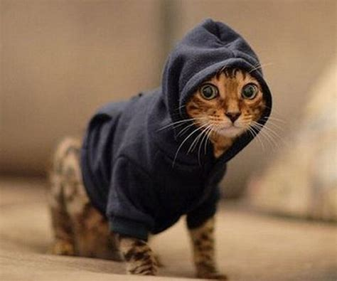 Cat Hoodie pet hoodies make your pet look gangster creepbay