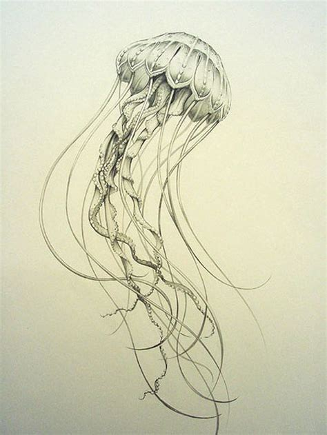Drawing Jellyfish by Bozic Inspiration To Draw From