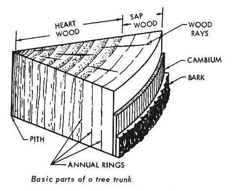 labeled tree diagram hobbit house glossary