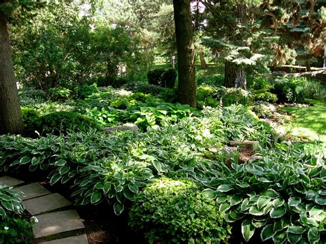hosta garden layout astrid s garden design reliable hostas