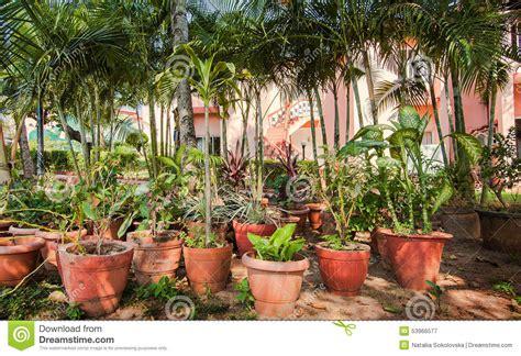 Blumen F R Schattige G Rten 997 by Pflanzen F 252 R Schattigen Garten Garten Gebirgs Pflanzen F