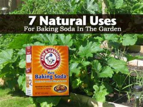 killing crabgrass with baking soda 7 uses for baking soda in the garden plant care
