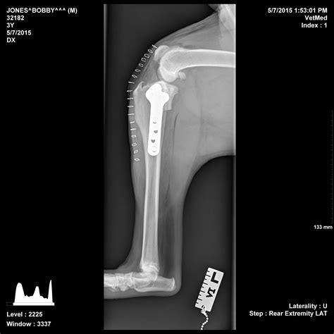 tplo surgery tibial plateau leveling osteotomy tplo