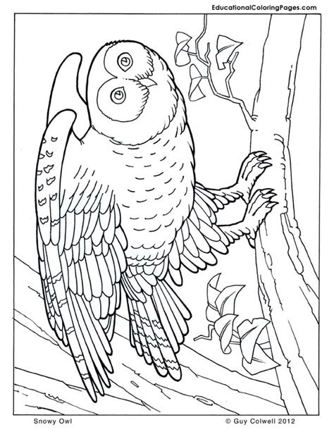 coloring page snowy owl owl coloring pages animal coloring pages for kids