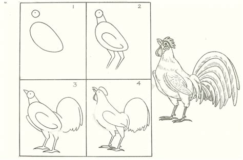 how do you draw a diagram how do you draw a bird step by step pencil drawing