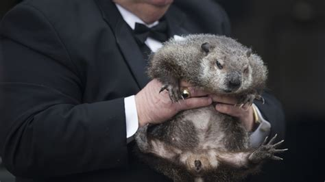 groundhog day moment meaning no shadow pennsylvania groundhog predicts early