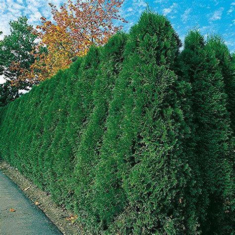 Garten Sichtschutz Pflanzen Pflegeleicht by Z 228 Une Sichtschutz Garten Schl 252 Ter Und Andere