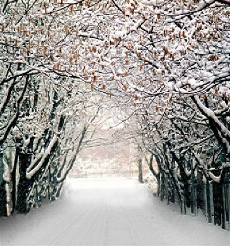 Wedding Winter Background by Winter Forest Vinyl Photography Studio Prop Backdrops