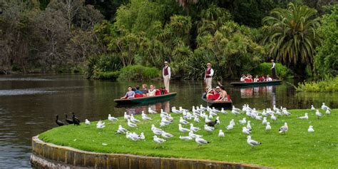 High Tea Botanical Gardens Melbourne Melbourne Highlights Day Tour With Punting At The Botanic Gardens Gray Line