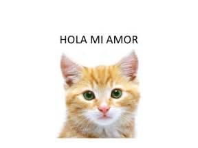 hola mi hola mi amor