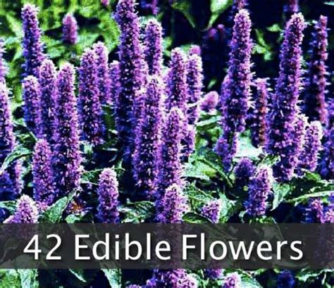 42 flowers you can eat treehugger 42 flowers you can eat shtf prepping homesteading central