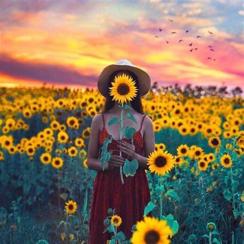 sunflower fields best 25 sunflower fields ideas on