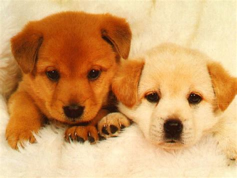 my puppies dogs images icons wallpapers and photos on fanpop