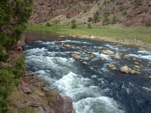 green river a section flyfish with utah s premier green river fly fishing guide