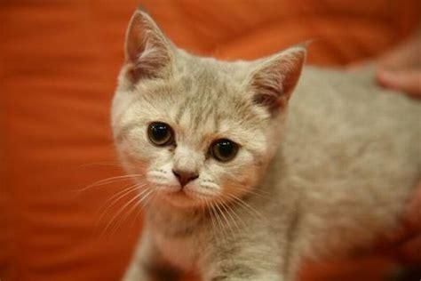 ab wann werden katzen rollig 8 hunde und 11 katzen werden es nicht 252 berleben