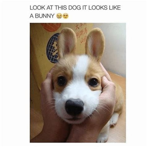 like a bunny like a bunny look at this dog it looks like a bunny