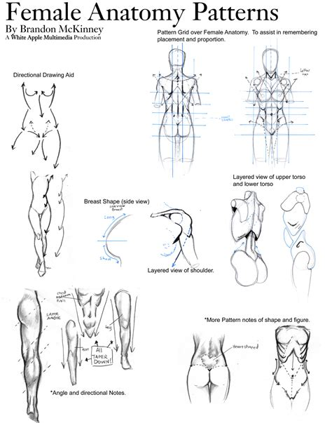 full female anatomy female anatomy patterns by snigom on deviantart