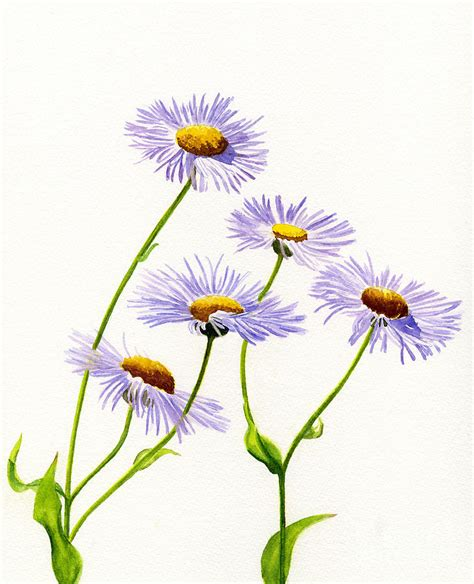 douglas aster wild flower painting by sharon freeman