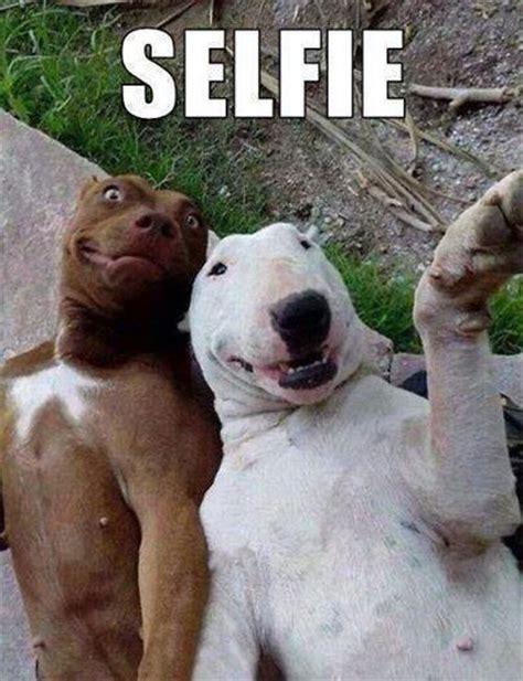 Gay Dog Meme - 蝴mieszne memy i obrazki o zwierz苹tach funny animal memes