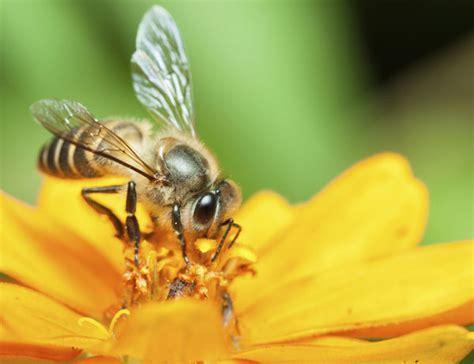 minicuentos de abejas y 8448838475 191 cu 225 ntas flores hacen falta para producir un kilo de miel