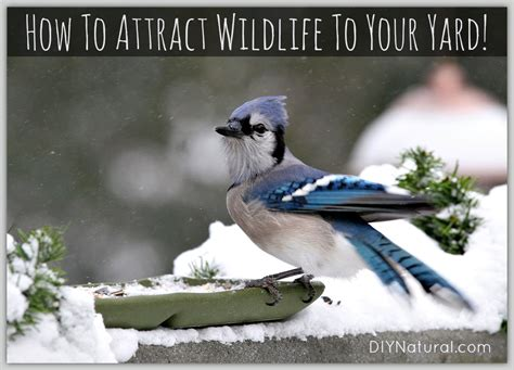how to attract wildlife to your backyard how to attract birds and wildlife to your yard