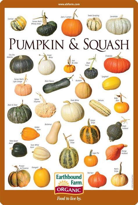What Do You Call The Vegetable Pictured Below by Best 25 Squash Varieties Ideas On Winter