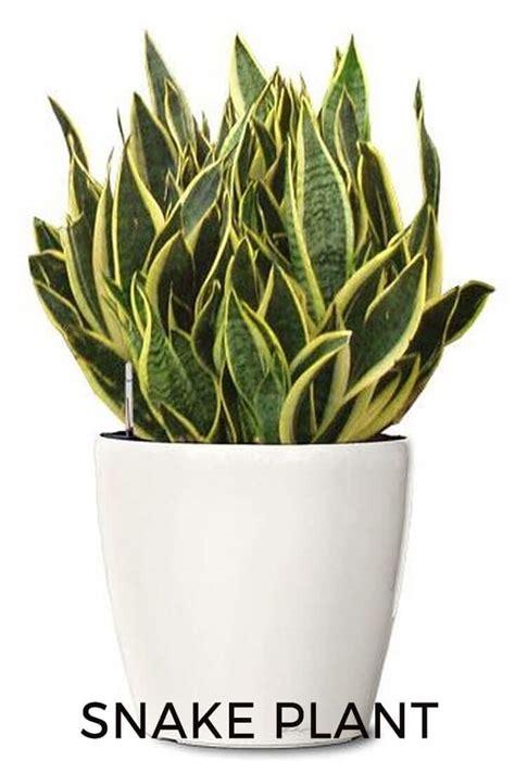 best houseplants to keep in your bedroom for better sleep best plants to keep in your bedroom to help you sleep