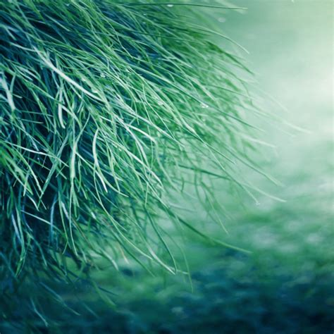 whatsapp wallpaper grass pure grass water drops on grass 4k widescreen wallpaper