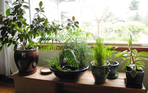 Miniature Indoor Plants | caring for your indoor miniature gardens the mini