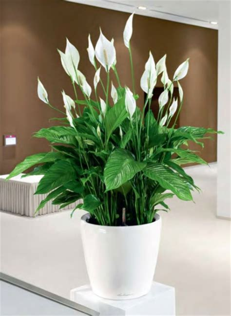 plants for the office london office plants and office planters