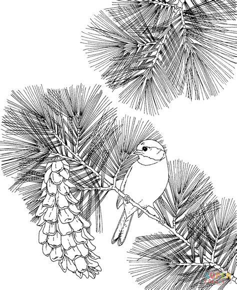 chickadee bird coloring page massachusetts state bird drawing