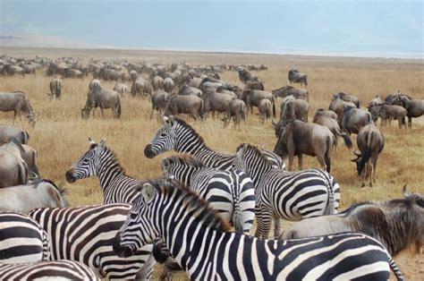 el sueno de africa kenya y tanzania el sue 241 o de 193 frica