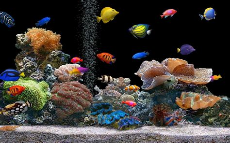 hd wallpaper fish aquarium  desktop