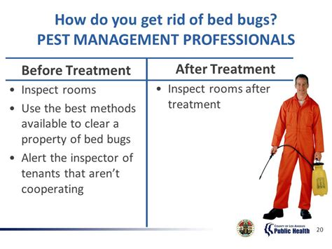 how can you get rid of bed bugs can t get rid of bed bugs 28 images best way to kill