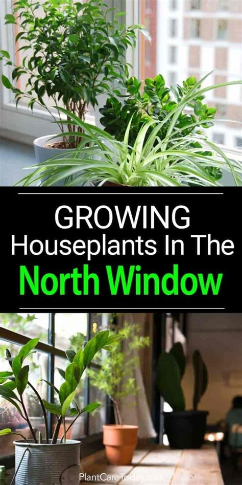 north facing window plants  images