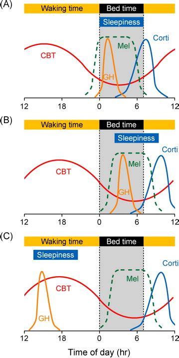 temporal regulation  human circadian rhythms  body temperature  scientific diagram