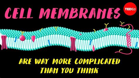cell membranes    complicated