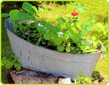 container gardening vegetables and herbs container gardening vegetables and herbs plant varieties