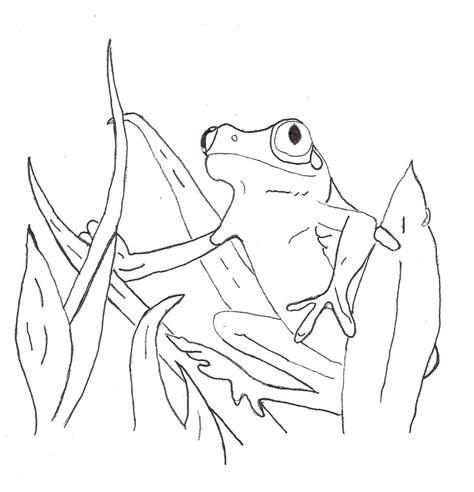 coloring page poison dart frog poison dart frog coloring page coloring home