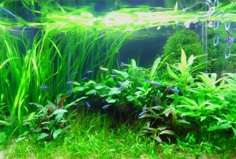 Substrate Aquascape by The Soil Substrate Or Dirted Planted Tank A How To Guide