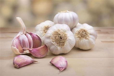 coltivazione aglio in vaso coltivazione aglio aromatiche come coltivare l aglio