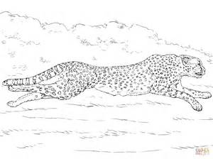 cheetah coloring pages 42 coloring pages cheetah to print gianfreda net