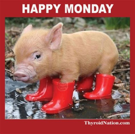 Happy Monday Meme - happy monday meme thyroid nation 3 thyroid nation
