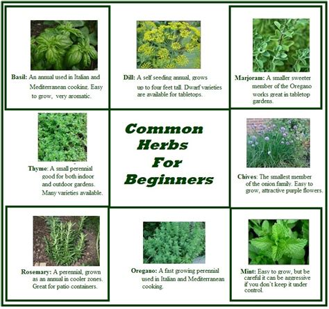 When To Start Garden Seeds Indoors - dtl herbs ltd unusual herb presentation