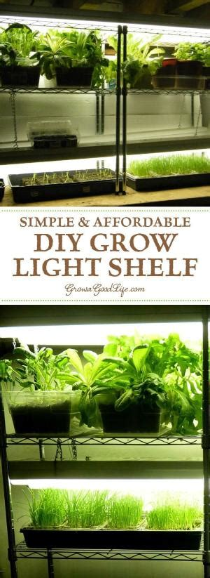 lights to grow herbs indoors an ecosystem for growing your own veggies at home and indoors