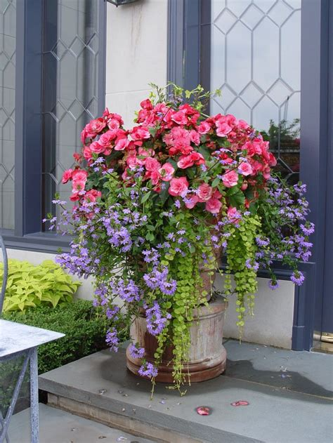 design flower containers pink begonias and scaevola container gardening